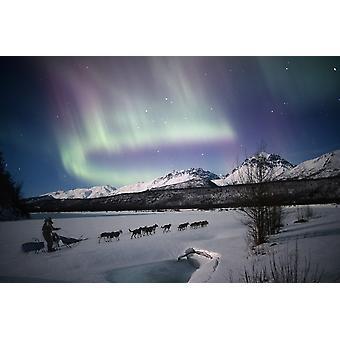 مشاهدة المناظر الطبيعية الخلابة لفريق الكلب موشينج على نهر Matanuska مع Matanuska علوية الشفق القطبي الشمالي سوسيتنا ساوثسينترال وادي ألاسكا بوستيربرينت مركب الشتاء