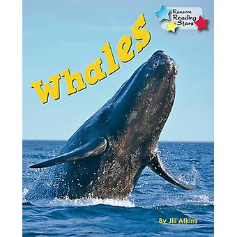 Whales - 9781781278420 Book