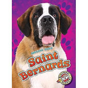 Saint Bernards (Awesome Dogs)
