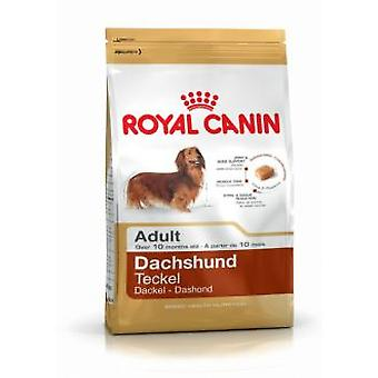 Royal Canin Teckel Adult (Honden , Voeding , Droogvoer)