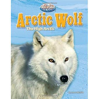 Arctic Wolf: The High Arctic