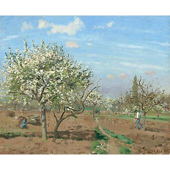Orchard in Bloom, Louveciennes, Camille Pissarro, 50x40cm