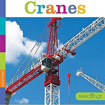 Grues (semis)