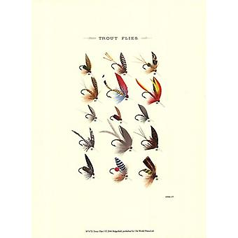 Trout Flies I Poster Print by Vision studio (10 x 13)
