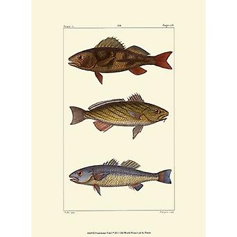 Freshwater Fish I Poster Print by Pretre (10 x 13)