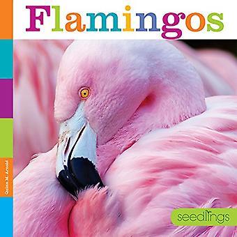 Plantor: Flamingos (plantor)