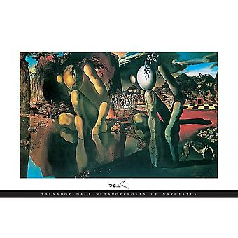 Salvador Dali Metamorphosis Poster Print Metamorphosis of Narcissus Poster Poster Print
