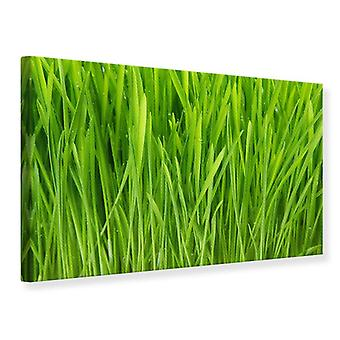 Canvas Print gras In Morning Dew