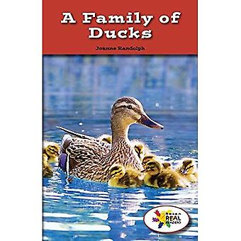 Une famille de canards (lecteurs de Rosen Real: tige et Collection de vapeur)