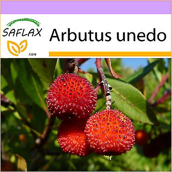 Saflax - 50 seeds - Strawberry Tree - Arbousier - Albatro - Árbol de las fresas - Erdbeerbaum