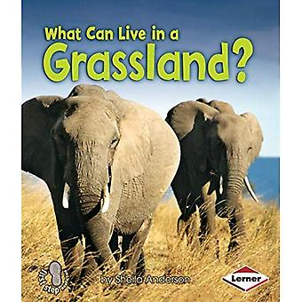 What Can Live in a Grassland? (First Step Nonfiction)